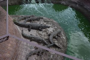 Crocoparc d'Agadir - Photo 4