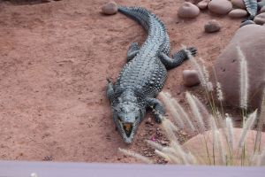 Crocoparc d'Agadir - Photo 8