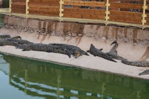 Crocoparc d'Agadir - Photo 10