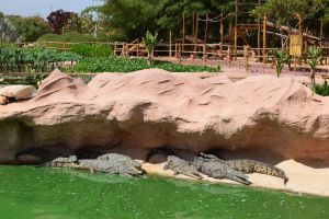 Crocoparc d'Agadir - Photo 28