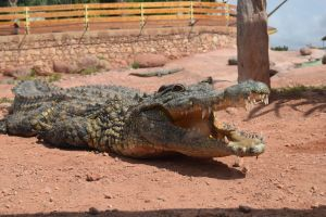 Crocoparc d'Agadir - Photo 34