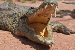 Crocoparc d'Agadir - Photo 36