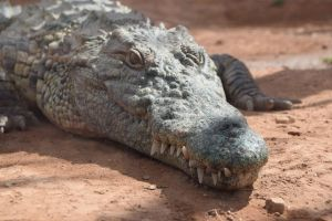 Crocoparc d'Agadir - Photo 37